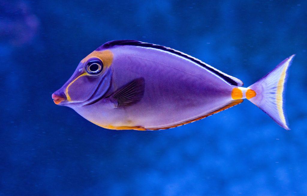 Fisch Urvertrauen